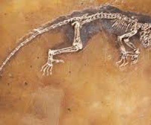 Paleontoloji Ve Paleontolog Nedir?