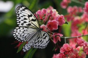 Sabır Acıdır Meyvesi Tatlıdır Atasözünün Anlamı Kısaca ile ilgili görsel sonucu
