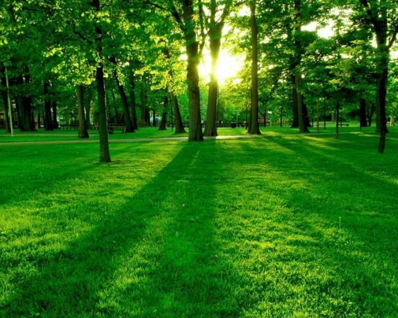 ormanlık ile ilgili görsel sonucu