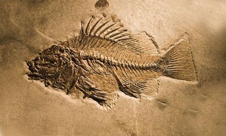 fosiller ile ilgili görsel sonucu