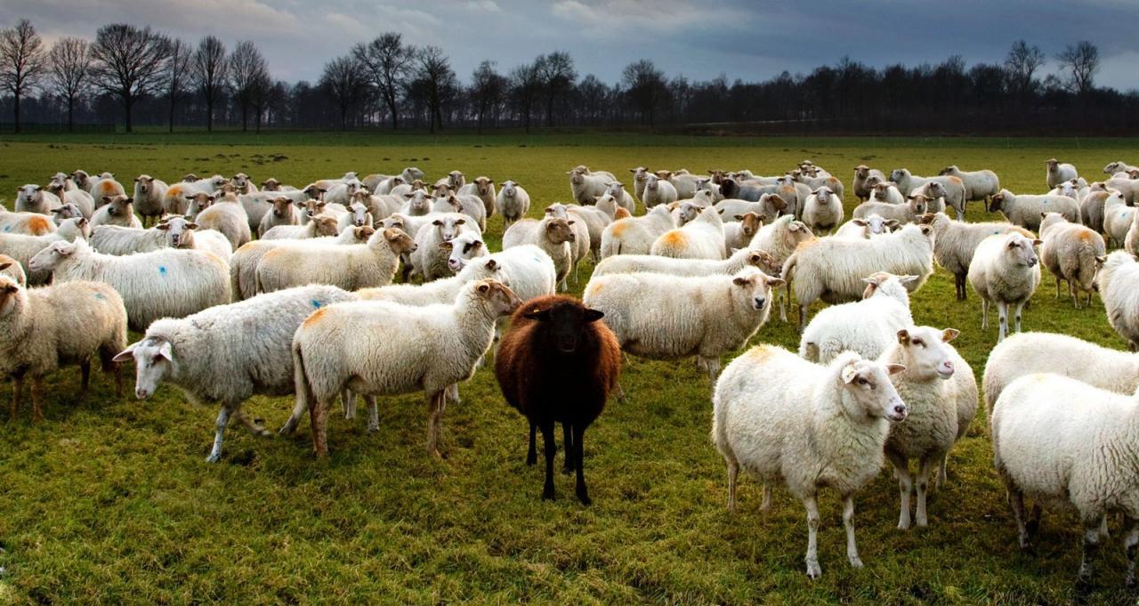 hayvancılık ile ilgili görsel sonucu