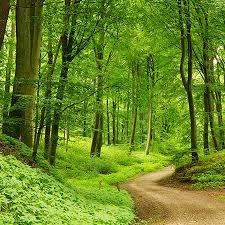 orman ile ilgili görsel sonucu