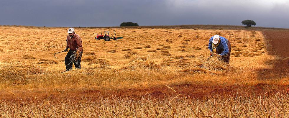 tarım ile ilgili görsel sonucu
