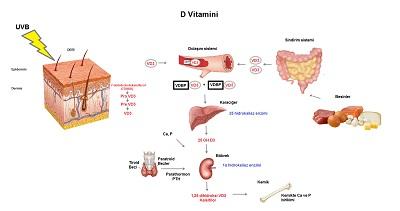vitamin sentezi ile ilgili görsel sonucu
