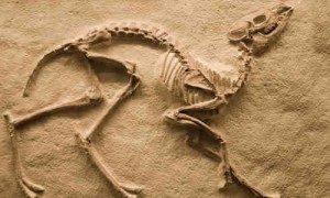 paleontolog ile ilgili görsel sonucu