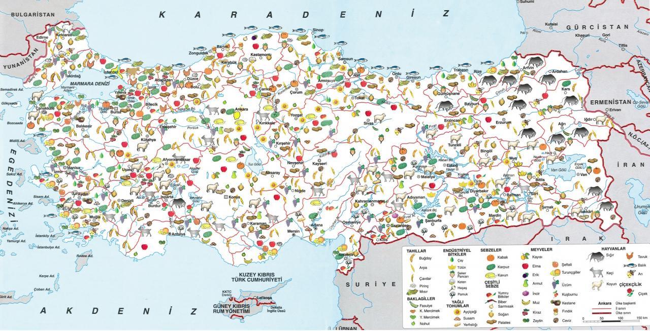 bölgelere göre ekonomik faaliyetler ile ilgili görsel sonucu