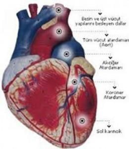 ani-kalp-krizi-gencleri-tehdit-ediyor-491735n