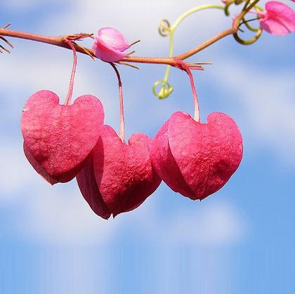 sevgi ile ilgili görsel sonucu