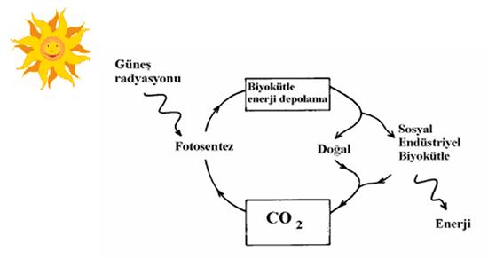 bitkisel enerji ile ilgili görsel sonucu