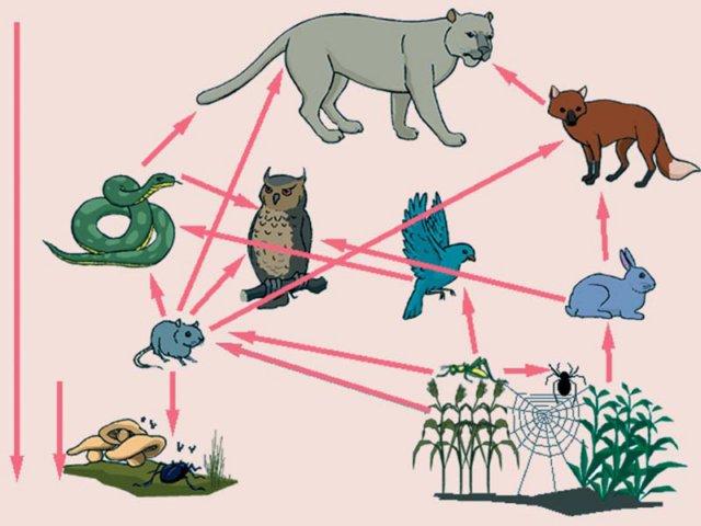 beslenme şekilleri canlılar ile ilgili görsel sonucu