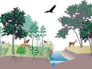 ekosistem ile ilgili görsel sonucu
