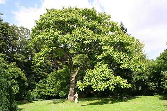 ağaç ile ilgili görsel sonucu