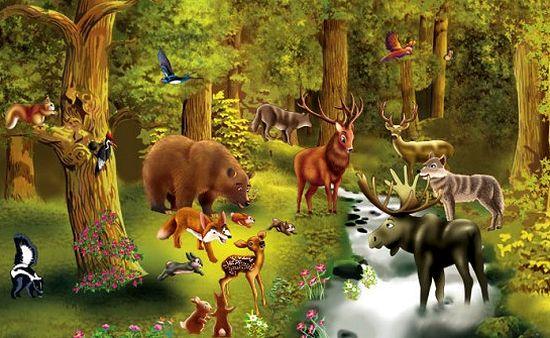orman hayvanlar ile ilgili görsel sonucu