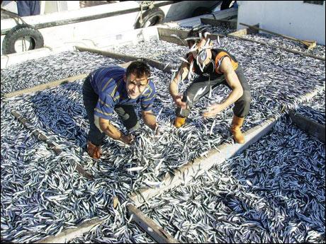 karadeniz balık ile ilgili görsel sonucu