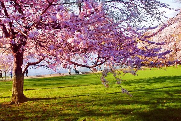 ilkbahar ile ilgili görsel sonucu