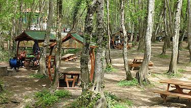 orman piknik masal ile ilgili görsel sonucu
