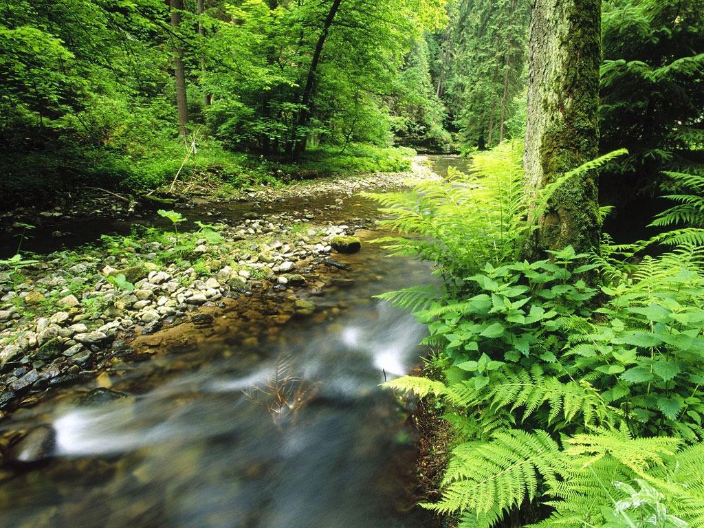 doğal yaşam alanları ile ilgili görsel sonucu