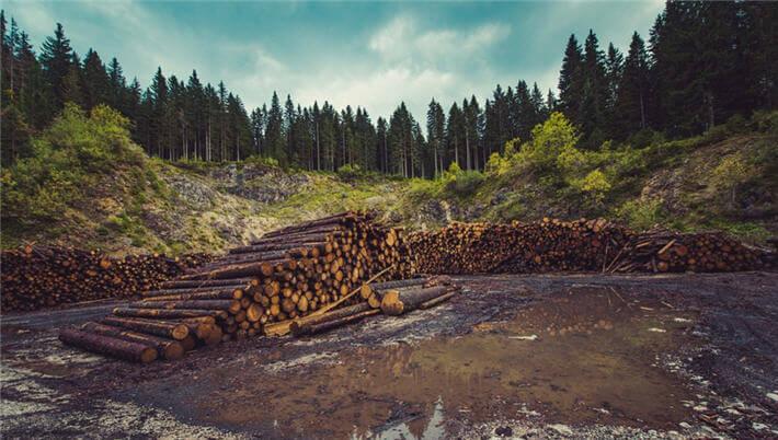 ormancılık ile ilgili görsel sonucu