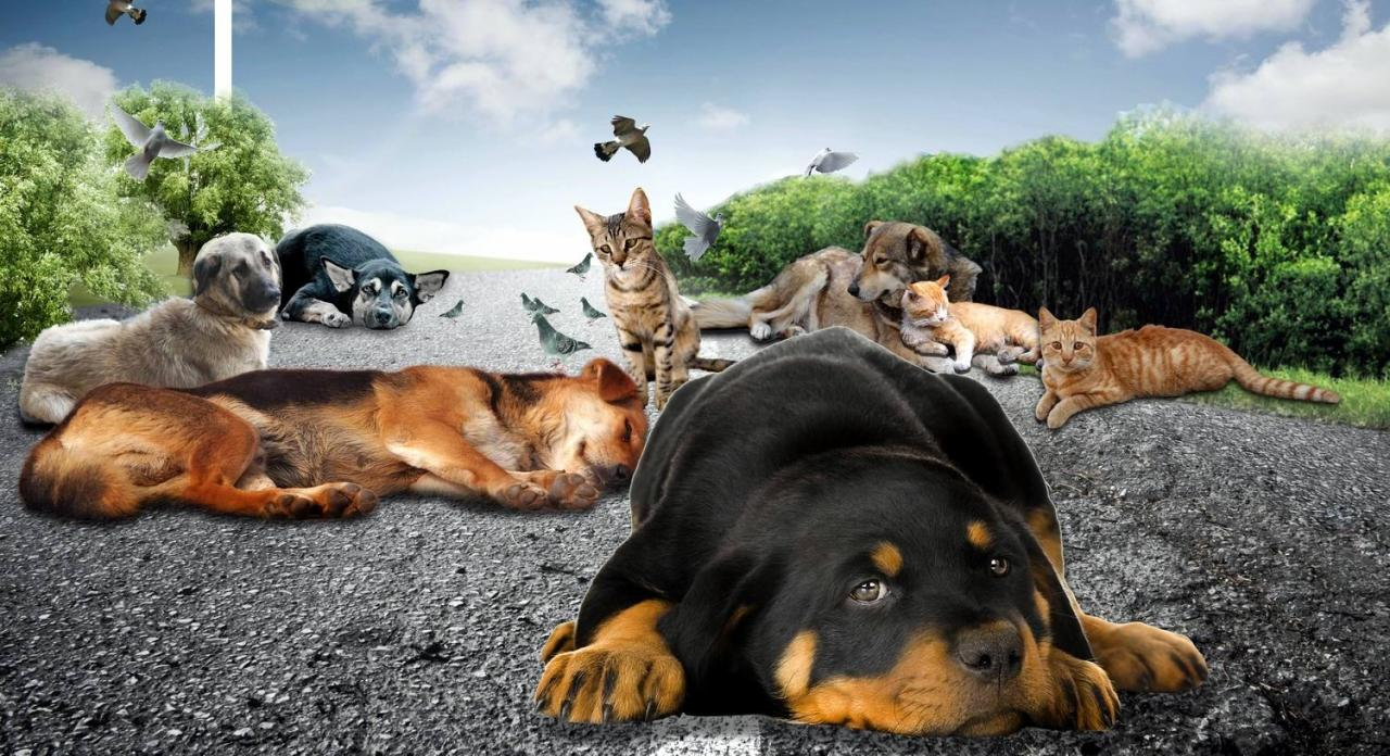 sokak hayvanları ile ilgili görsel sonucu